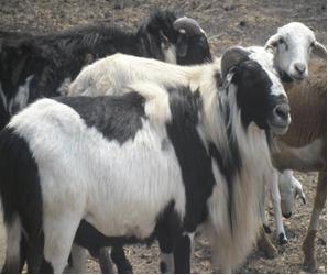 LIP . Micro-livestock Production