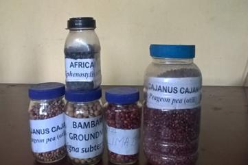 GLIPSome underutilized Legumes