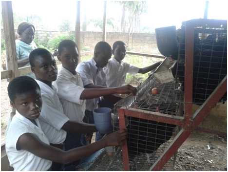 swfsrep poultry student