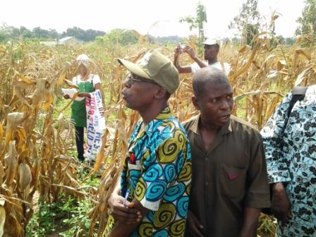 I. Farmers at the Participatory Varietal Selection from newly developed hybrids by farmers in Iwo, Osun State